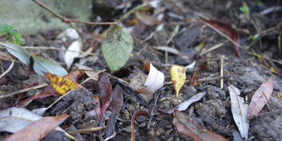 sols reconstitués sols vivants sols artificialisé désimperméabilisation