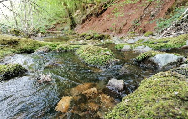 ecologie urbaine rehabilitation rivière reméandrement directive cadre sur l'eau restauration de rivière