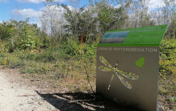 Phytoremediation écologie urbaine pollution biodiversite positive sol vivant sol fertile nature en ville bureau d'étude environnement