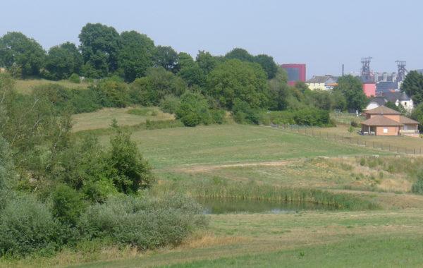 écologie urbaine, sols vivants, sols fertiles friche industrielle, sites et sols pollués, nfx 31-620, pollution, phytoremediation